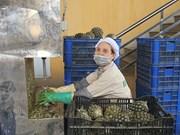 [Foto] Empresas vietnamitas producen en contexto de la pandemia