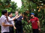 """""""Rey de lichi vietnamita"""" busca conquistar mercados exigentes"""
