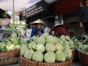"""Provincia promueve divulgación de su especialidad local de anón """"Chi Lang"""""""