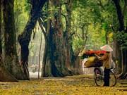 El otoño llega a las calles de Hanoi