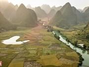 Espectacular paisaje en la temporada de cosecha de arroz en la provincia vietnamita