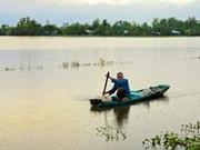 Campos arroceros inundados en provincia de Hau Giang