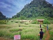Campo de flores de alforfón, destino atractivo en provincia vietnamita de Ha Giang