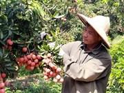 Exportaciones de Vietnam ascenderán a 267 mil millones de dólares en 2020
