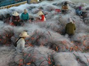 [Fotos] Bonitas fotos sobre la fabricación de redes de pesca en provincia vietnamita
