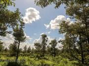 Delta del Mekong de Vietnam hace frente a la salinización