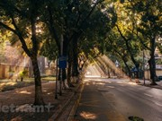 Visita la calle más hermosa de Hanoi en el comienzo del otoño