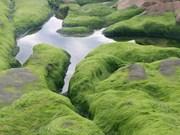 Impresionante belleza de playa de musgo en provincia vietnamita de Binh Thuan