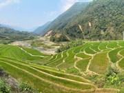 Belleza de las terrazas de arroz en provincia vietnamita de Lai Chau