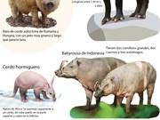 [Info] Cerdo, signo del Año Lunar 2019