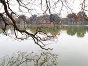 [Fotos] Los árboles de lagerstroemia en Hanoi lucen sus nuevas hojas en la primera