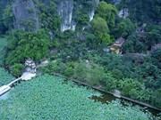 [Fotos] Temporada de floración de lotos en Ninh Binh
