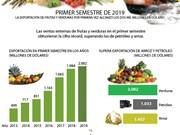 [Info] Las ventas externas de frutas y verduras en el primer semestre obtuvieron la cifra récord
