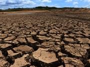 [Foto] Sequía afecta severamente al cultivo de arroz en provincia central de Dak Lak
