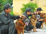 [Foto] Entrenamiento en unidades caninas policiales