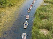 [Foto] Ninh Binh: temporada de aves migratorias en laguna Van Long
