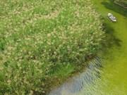 [Foto] Trang An en temporada de plantae en floración