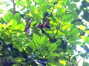 [Foto] Guardabosques de Son La liberan a un loris lento pigmeo al bosque