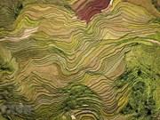 [Foto] Arrozales en terrazas en las tierras altas en Hoa Binh