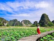 [Foto] Temporada de floración de lotos en Vietnam
