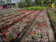 Hermoso campo de flores de primavera en el río de Saigón