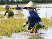Impulsan agricultura con adaptación al cambio climático en Vietnam