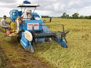 Establecen marcas comerciales para productos agrícolas de Vietnam
