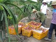 Exportaciones vietnamitas de vegetales y frutas superan dos mil millones de dólares