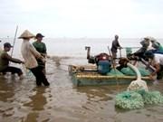 Vietnam desarrolla cría sostenible de almeja