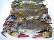 Provincia vietnamita desarrolla marca de cangrejo blando