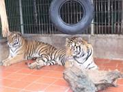 Agencias de viajes luchan contra comercio de animales y plantas silvestres