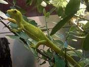 Encuentran 163 nuevas especies en subregión de Mekong