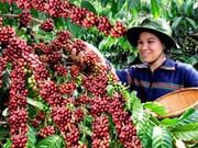 Vietnam exportó 1,79 millones de toneladas de café en 2016
