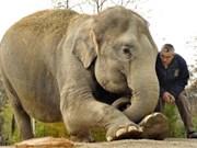 Debaten medidas para la preservación de elefantes en Vietnam