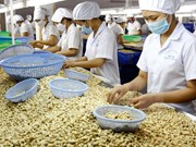 Sector de anacardo de Vietnam prevé crecimiento en 2017