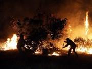 Indonesia aplicará medidas estrictas contra culpables de incendios forestales