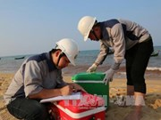 Urgen a control del ambiente marino en provincias centrovietnamitas