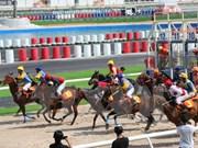 Gobierno vietnamita avala apuestas en carreras de perros y caballos