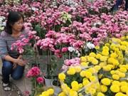Se aproxima mayor festival de rosas en Vietnam