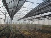 Vietnam busca reducir emisiones de gases de efecto de invernadero en agricultura