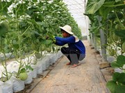 Construirán en provincia sudvietnamita fábrica de procesamiento de frutas
