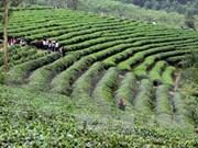 Vietnam lidera destinos más económicos para visitar en 2017, según Forbes