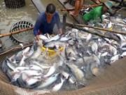 Expertos: Exportadores vietnamitas de pescado Tra deben mirar hacia mercado asiático