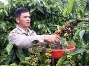 Organizarán en provincia vietnamita festivales del café y de cultura de Altiplanicie
