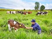 Vietnam y Australia cooperan en ganadería