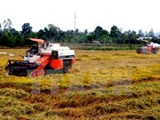 Inicia en Vietnam programa de producción de arroz con apoyo de Canadá