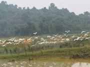 Thanh Hoa refuerza protección de población de aves en parque de Ben En