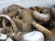 Asistencia estadounidense para combatir contrabando de animales silvestres