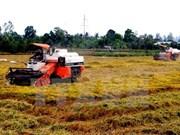 Productos de arroz orgánicos de Vietnam gozan de preferencia en mercado de EE.UU.