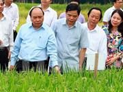 Abogan por establecer zona agrícola de alta tecnología en provincia survietnamita